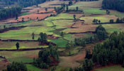 Bhutan Farmlands